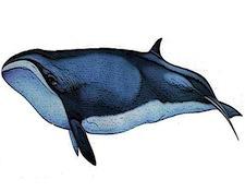 AR-whale1.jpg