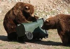 AR-bear2.jpeg