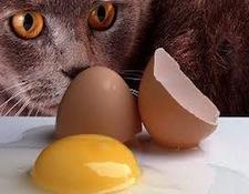 AR-cats1.jpg