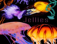 AR-jellies.jpg